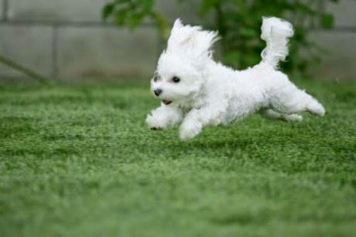 hundförsäkring moderna försäkringar